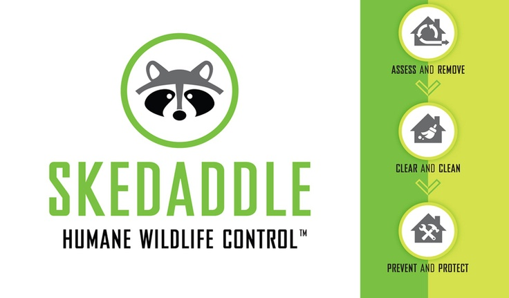Split, Scram, Scoot! However you want to say it, Skedaddle has helped over 200,000 homeowners and businesses safely and effectively resolve wildlife issues.