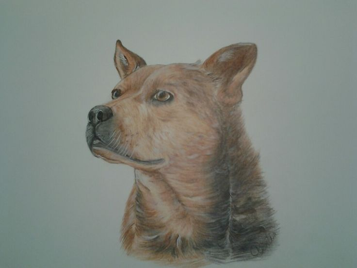Ollie, my son's dog ... prisma colored pencils