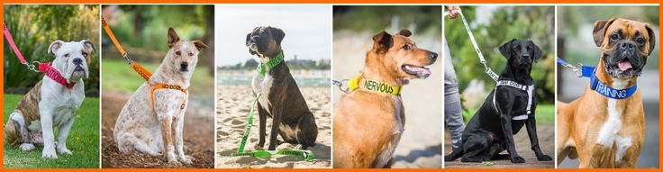 Best idea ever! Dog collars that tell others about your dog! >> dog collars --> www.friendlydogcollars.com
