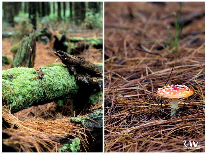Foraging for mushrooms out in the local pine forest is a favourite autumn past time. We've just written a blog post about it at http://downrightraw.com.au