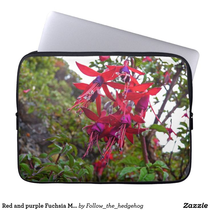 Red and purple Fuchsia Magellanica Laptop Sleeve Red and purple Fuchsia Magellanica. Hummingbird Fuchsia or Hardy Fuchsia is a species of flowering plant in the Evening Primrose family, native to Patagonia. The picture was taken in Ushuaia, Argentina