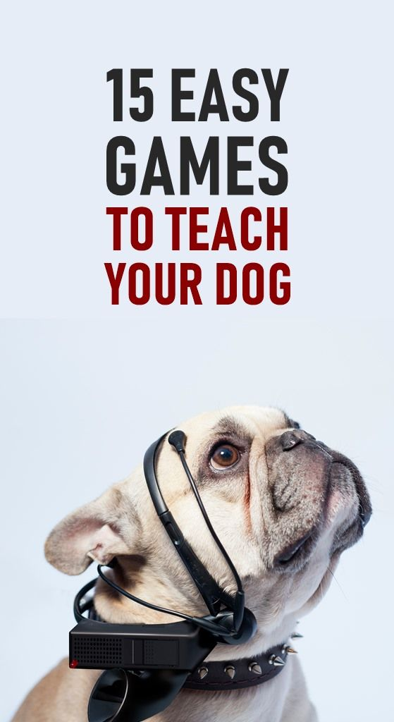 Relieve Dog Boredom With These 15 Fun Games To Play With Your Dog