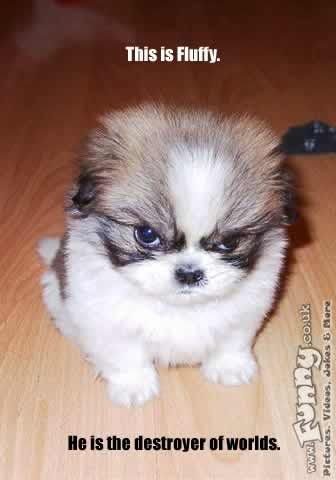 We all nees a dog like this :-)