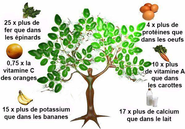 L'arbre miracle qui pourrait guérir 300 maladies, y compris les tumeurs et le diabète ! :https://mesremedesnaturels.com/larbre-miracle-qui-pourrait-guerir-300-maladies-y-compris-les-tumeurs-et-le-diabete/