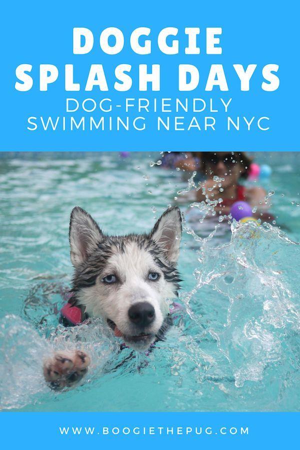 Doggie Splash Days Dog Friendly Swimming Near Nyc Dog Friends