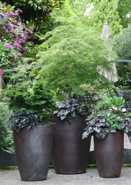 potted japanese maple and black on black