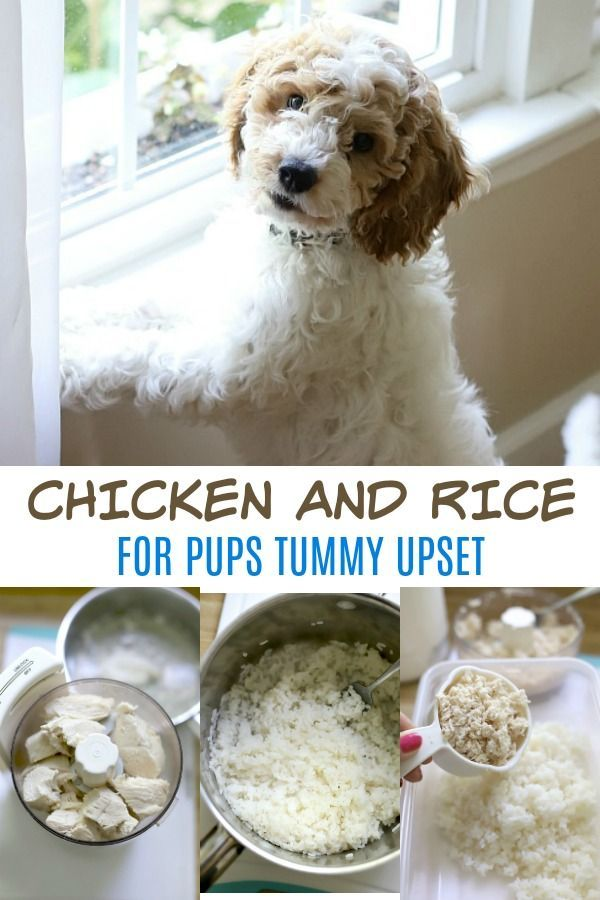 Chicken And Rice For Puppy Chicken Rice Recipe For Dogs Make