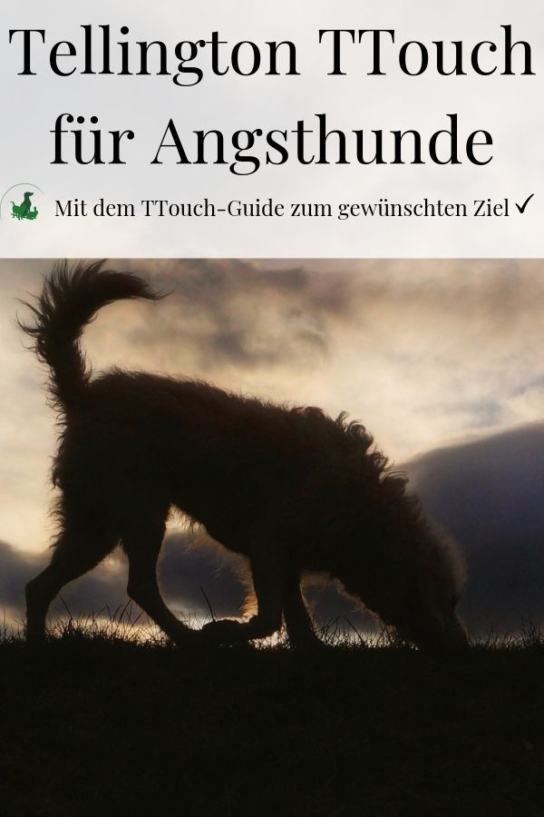 TTouch Guide für Angsthunde