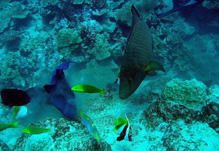 Snorkelling, Rarotonga For your luxury holiday, tropical wedding or honeymoon visit www.rumours-rarotonga.com/