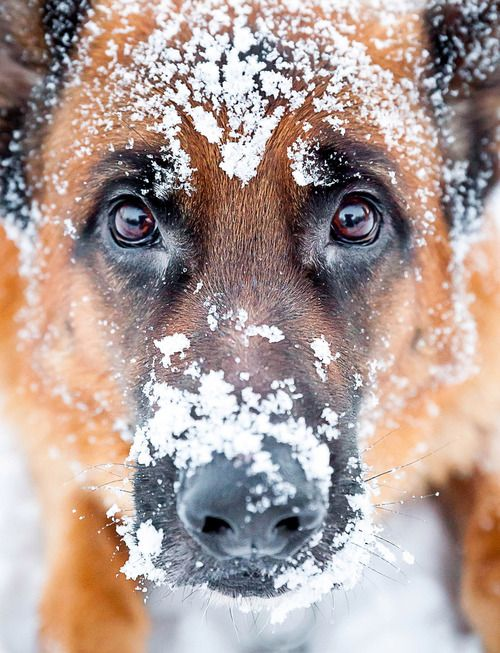 GSD- Surprise ! This stuff is cold !!