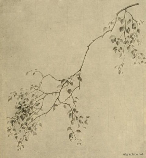 Google Image Result for http://www.artgraphica.net/images/how-to-draw-trees/i40-birch-tree-branches.JPG