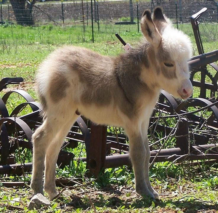 i heart baby donkeys