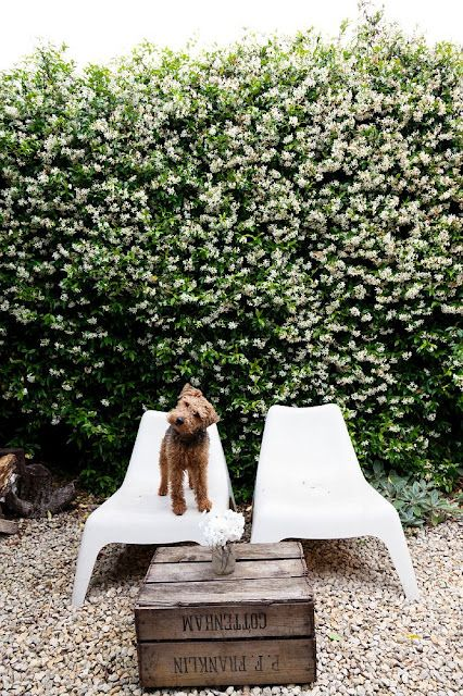 cool picture: Green Home, Crates Tables, Diy Crafts, Welsh Terriers, Halloween Crafts, Crafts Projects, Ikea Chairs, Air Terriers, Funny Puppies