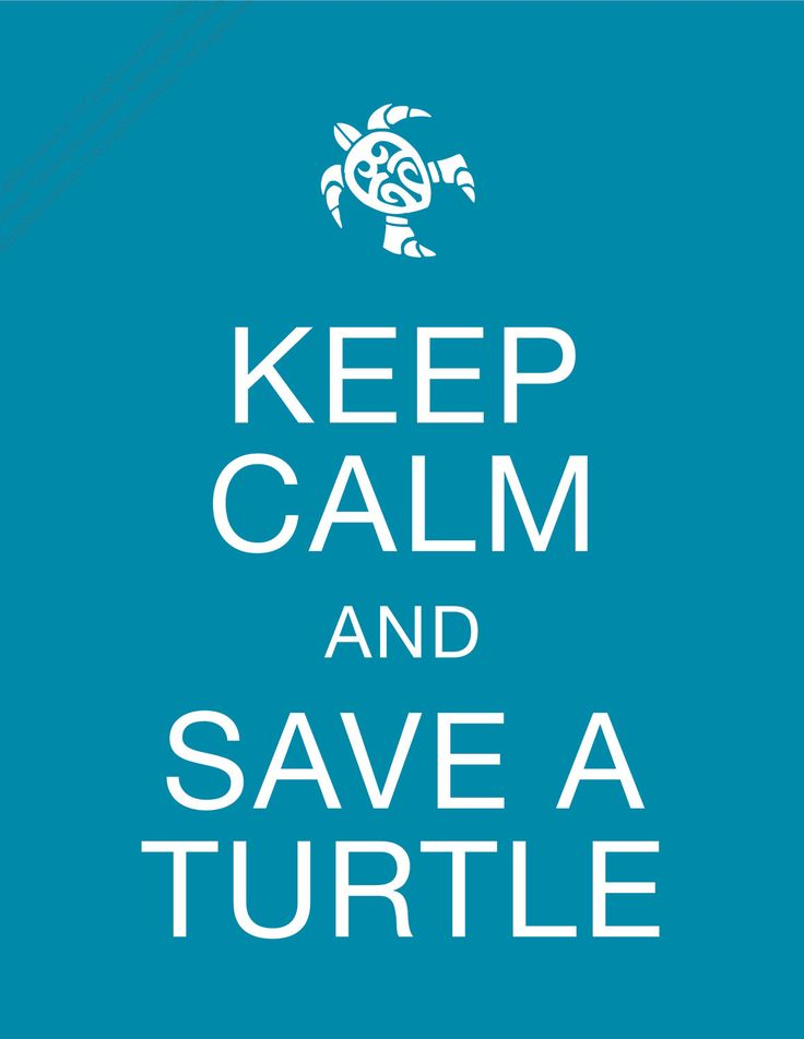 Want to adopt a Sea Turtle, Enquire below - Keep Calm and Save a Turtle 8 x 10 Conservation Print, 100% of Profits goes to ProTECTOR. $3.99, via Etsy.