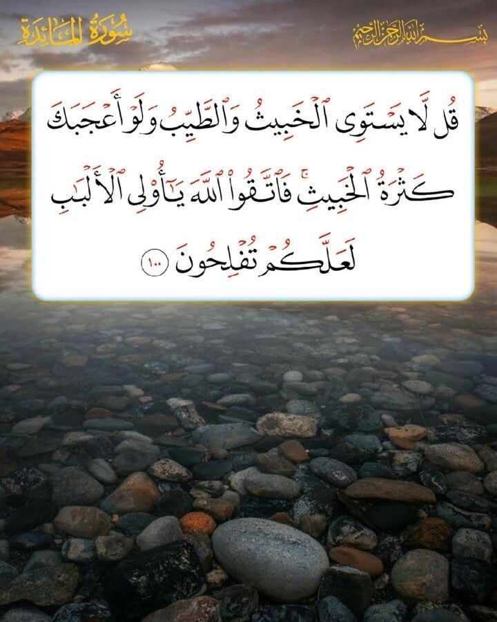 Pin By Maria Trifhat On القرآن الكريم In 2021 Beautiful Arabic Words Quran Verses Prayer For The Day
