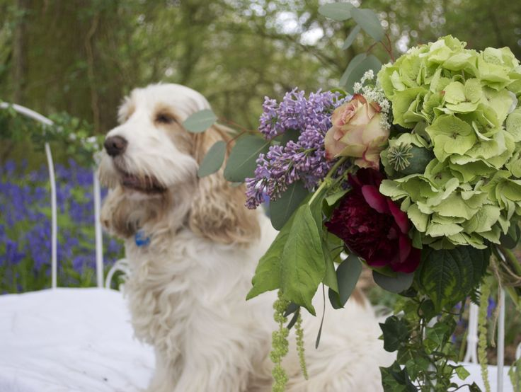 Green Hydrangea, Lilac, Upper Secret Roses and red Peonies created and designed by www.hannahberryflowers.co.uk  P.s the dog is called Ralf!!