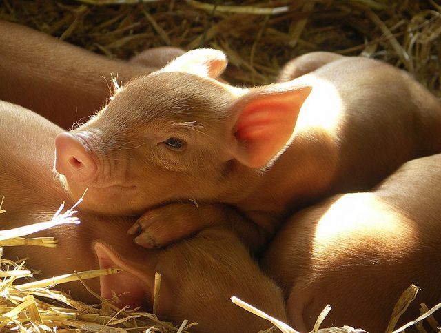 Happy as a pig in the sunshine...