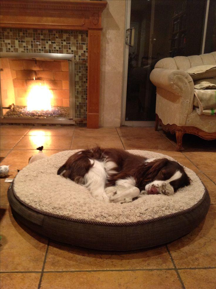 Sleeping by a cozy fire .