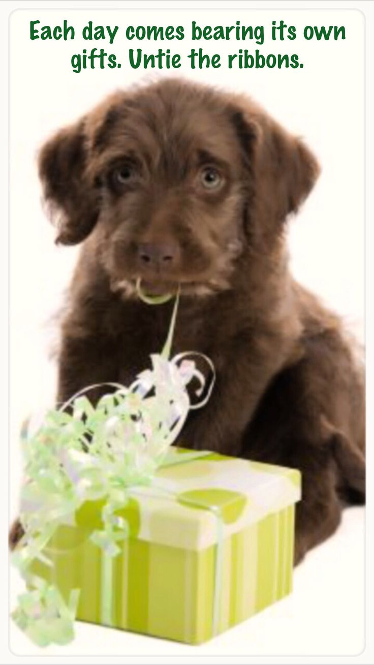 Good Morning | Every day | Live life | Cute dog | Present