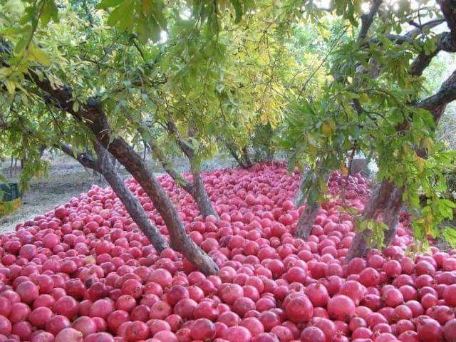 Pin By Sarvi On Fruits Veggies In 2020 Persian Food Iran Pomegranate