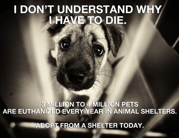I will be heading to a shelter soon to adopt a cat or two :-) Please adopt a shelter animal!