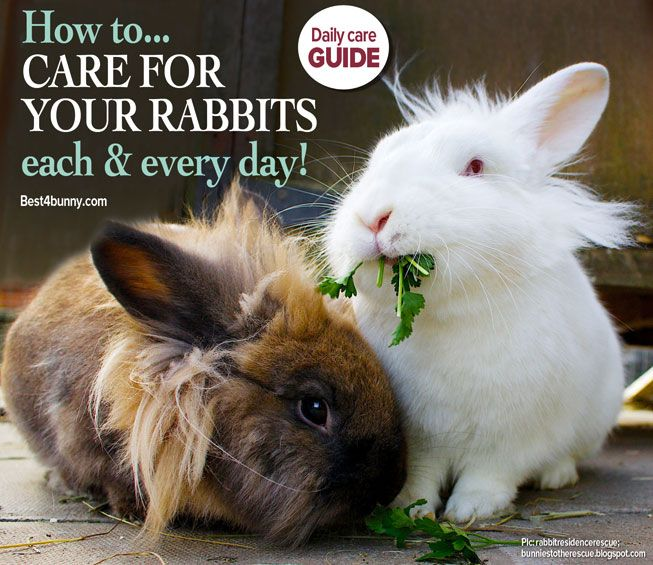 How does your daily bunny routine match up to ours? Click here to find out: http://best4bunny.com/care-rabbit-every-day/