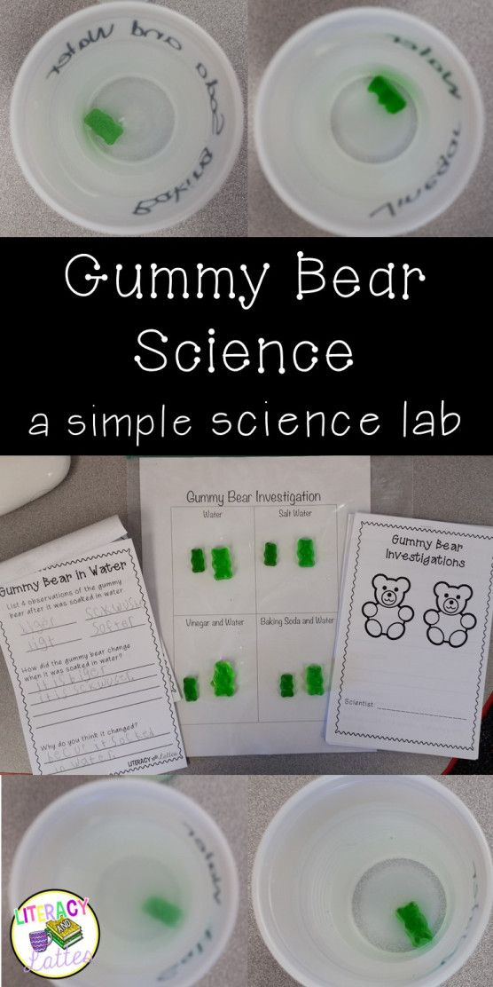 Gummy Bear Science Lab: A perfect introduction to the scientific method for kindergarten, first and second grade