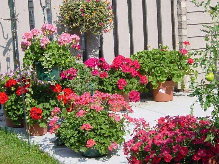 304 Best Images About Plantes Vertes Et Fleurs On
