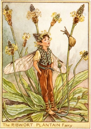 """""""To shop, and school, to work and play, The busy people pass all day; They hurry, hurry, to and fro, And hardly notice as they go, The wayside flowers, known so well, Whose names so few of them can tell. They never think of fairy-folk, Who may be hiding for a joke!"""" - Cicely Mary Barker (Flower Fairies of the Wayside)"""