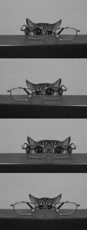 Chat en #lunettes #sunglasses #eyeglasses