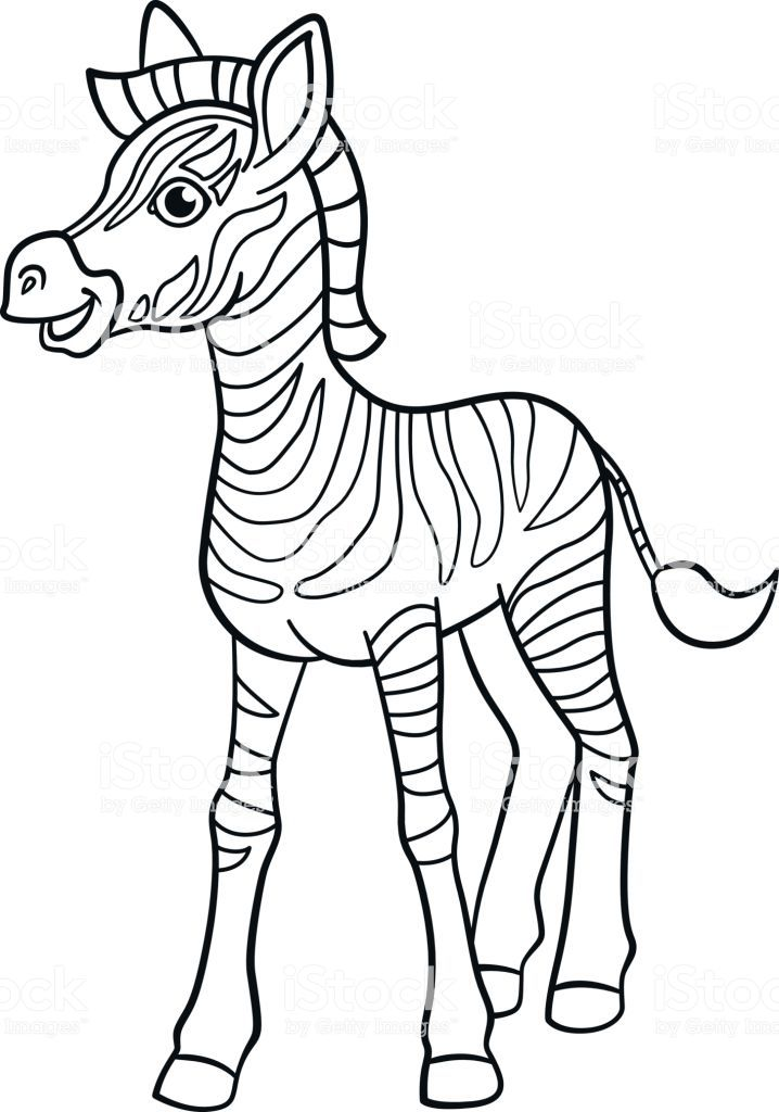 Google Image Result For Https Media Istockphoto Com Vectors Coloring Pages Little Cute Baby Zebra Smiles Zebra Coloring Pages Baby Zebra Cute Coloring Pages