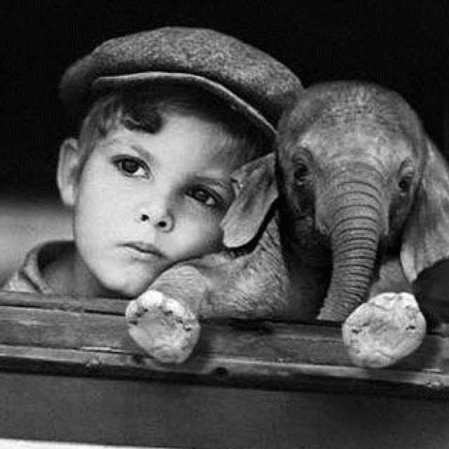 Cute little boy and baby elephant: Picture, Babies, Animals, Sweet, Baby Elephants, Boy, Photography, Kid