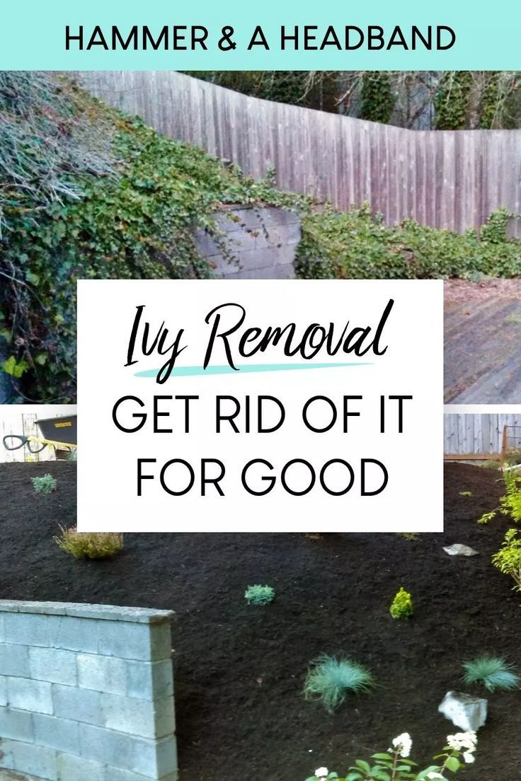 How To Get Rid Of Ivy For Good Landscaping Inspiration Gardening Blog Yard Landscaping