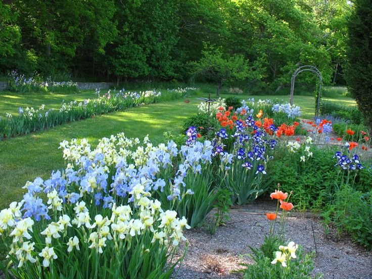 17 Best images about Iris wantgardens on Pinterest