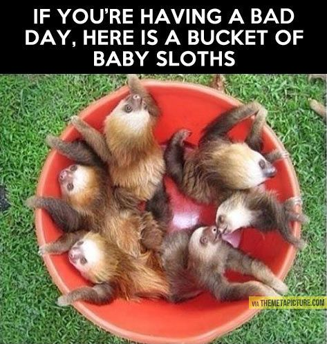 A bucket of baby sloths! I can't believe I'm pinning this....!!