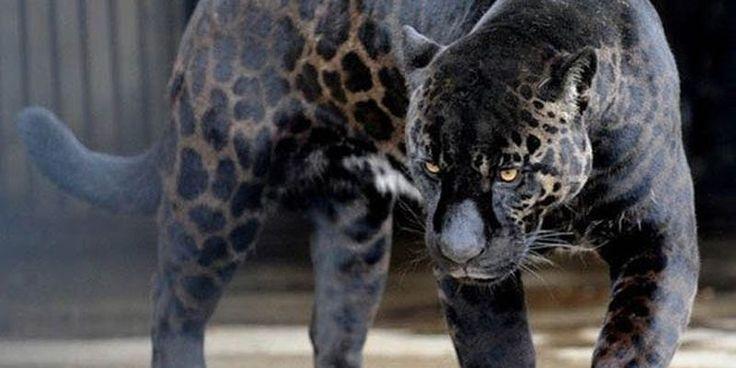 Мир находится на грани очередного великого вымирания видов