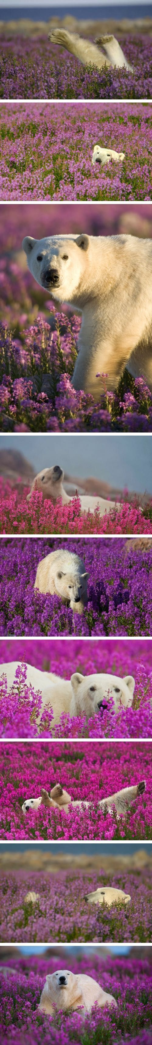 Polar Bear Spring Time :)