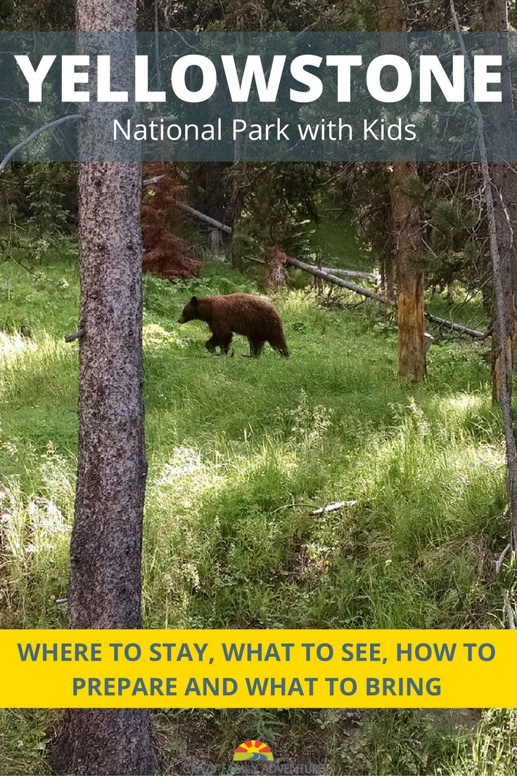 Visiting Yellowstone National Park with your kids is an amazing vacation! Come get tips on where to stay, what to see, how to prepare and what to bring when you take your family to Yellowstone National Park.