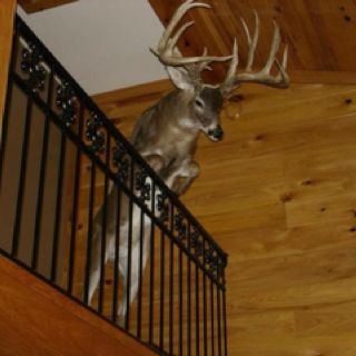 Ben says he will have one of these one day...I say it DEF goes to the man cave!: Future Houses, New Houses, The Loft, Full Body, Logs Home Decor, Deer Head, Big Bucks, Deer Mount, Outdoor Life