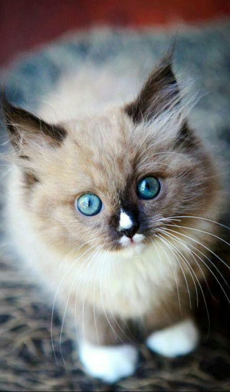 Pin by Diane Scheel on Kitty cats Pretty cats, Cute cats