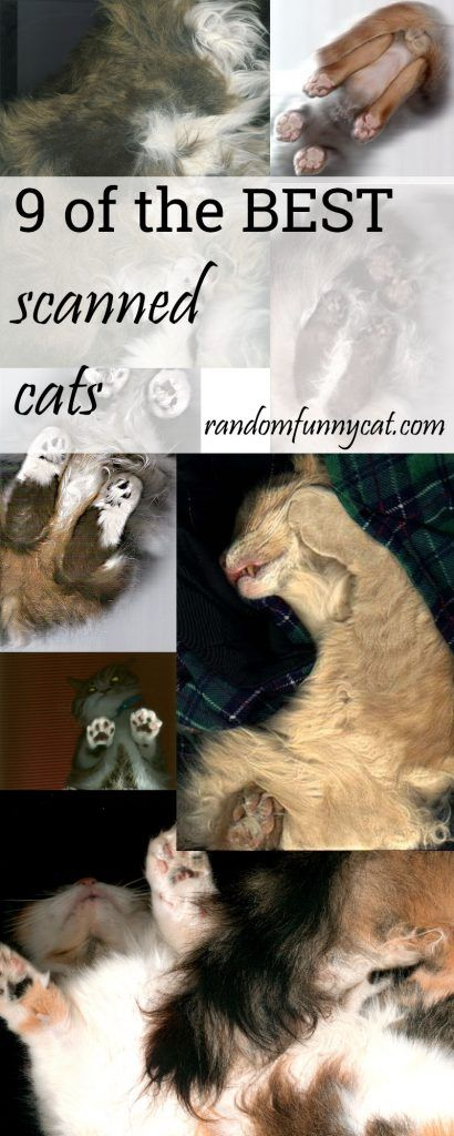Top 9 Scanned Cats on the Net!  #funnycatpictures