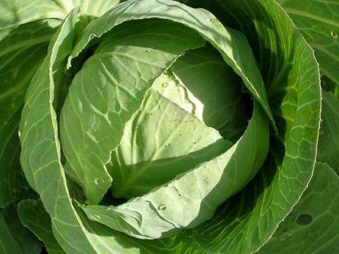 Лечение суставов капустным листом