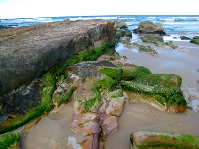 Near Shelley Head, Northern NSW - part of the Angourie Coastal Walk in Yuraygir National Park