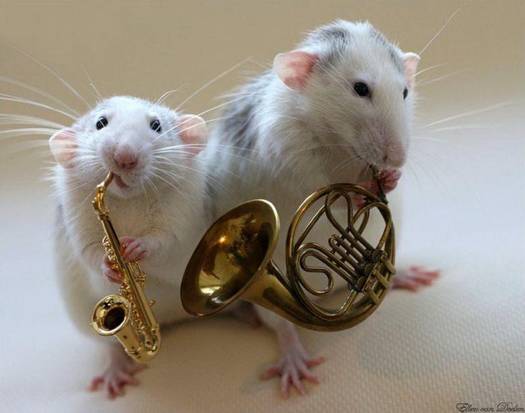 УЗНАЛ САМ  -  РАССКАЖИ ДРУГОМУ!: Крысы-артисты в фотоработах Эллен ван Дилен