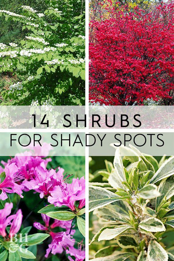 14 Beautiful Shrubs That Will Thrive In Shady Yards In 2020 Flower Garden Plans Container Garden Shrubs Shade Shrubs