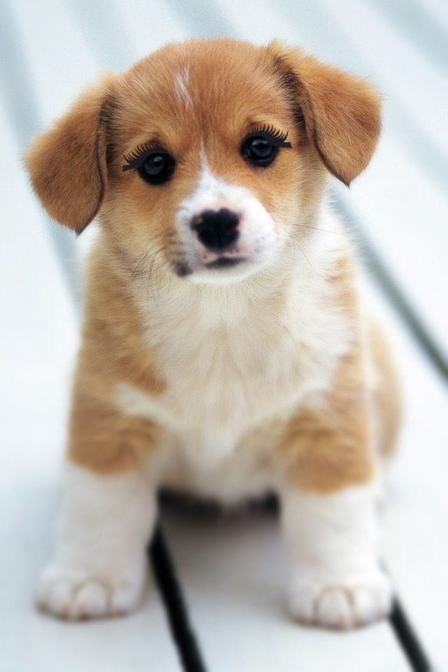 Look At That Little Puppy Cute Puppy Wallpaper Cute Little Puppies Baby Dogs