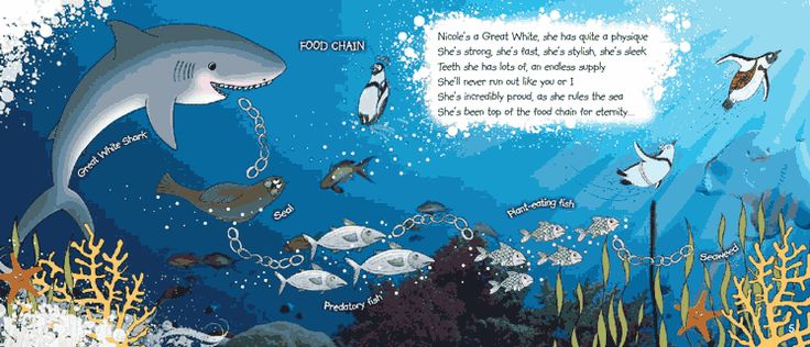 Great White Shark Facts for kids and teachers