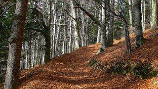 Outono, Estrada De Floresta, Folhagem