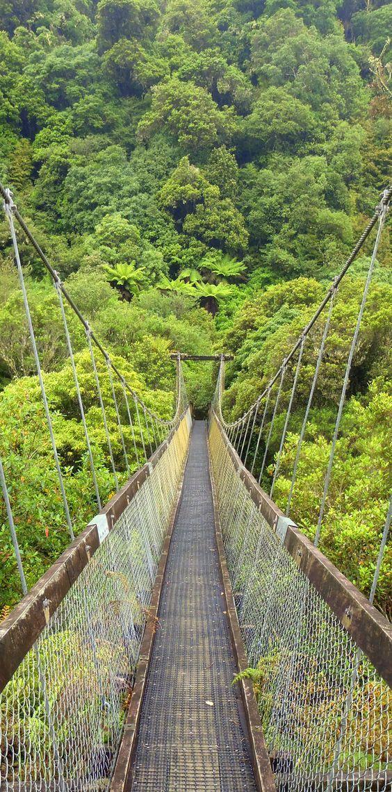 Motu Falls big swinging suspension bridge and dripping rainforest - Gisborne, North Island, New Zealand