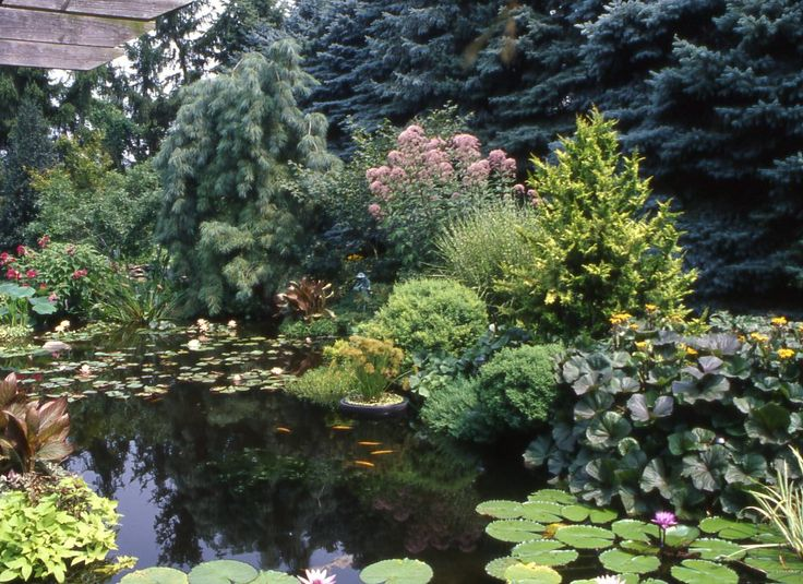 134 best images about waterway pond ideas on pinterest for Landscaping around a small pond